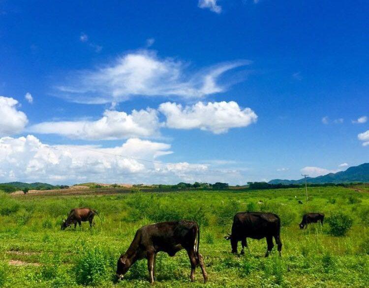 Ranch 10
